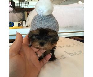 aww, baby, and beanie image