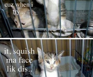cute, cat, and funny image