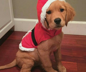 christmas, puppy, and cute image