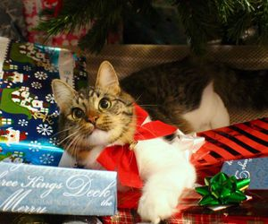cat, christmas, and gato image