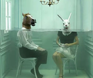 horse, rabbit, and room image