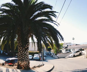 palm tree, road, and Houses image