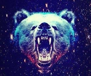 bear, hipster, and galaxy image