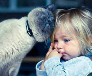 cat, baby, and child image