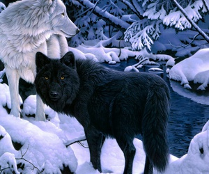 animal, forest, and wolf image
