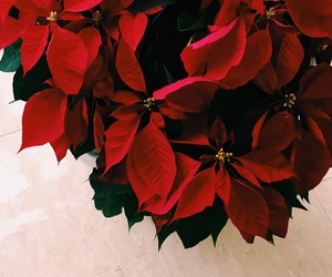 christmas, flower, and plants image