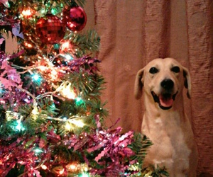 christmas, decorations, and dog image