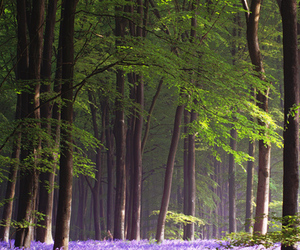 forest, place, and purple image