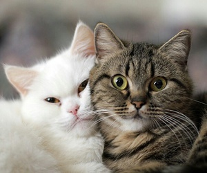 cat, animals, and cute image
