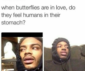 funny, butterflies, and meme image