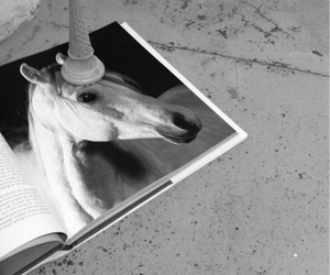 black and white, horse, and picture image