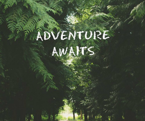 adventure, quotes, and tree image