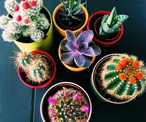 cactuses, coloured, and flowers image