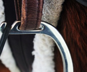 photography, equestrian equipment, and sirrups image