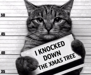 cat, christmas, and funny image