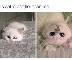 cat, funny, and white image