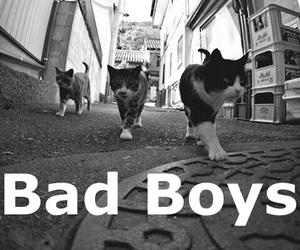 cat, bad boys, and boy image