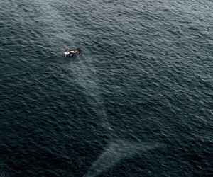 moby dick, sea, and whale image