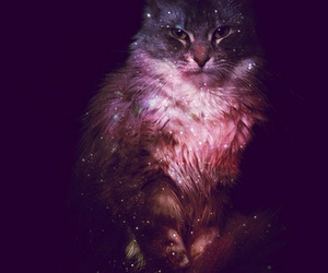 cat, galaxy, and stars image