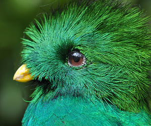 bird, green, and cute image