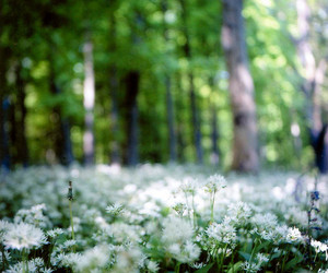 bokeh, Clearing, and flowers image