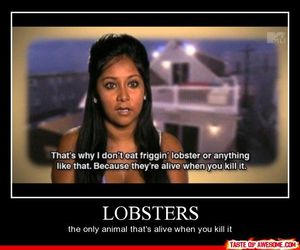 funny, snooki, and lobster image