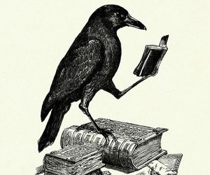 crow and books image