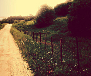 nature, road, and flowers image
