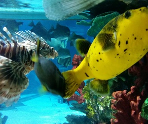 animal, beauty, and tropicarium image