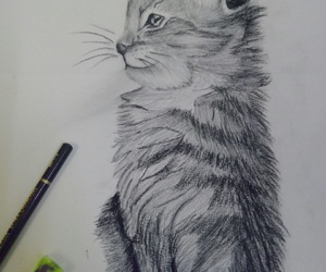 cat, draw, and my art image