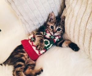 christmas, fashion, and gift image