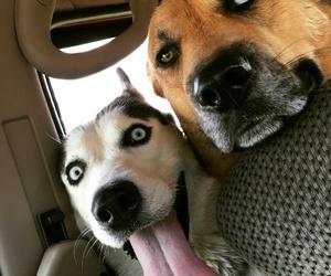 sarahdaier dogs image