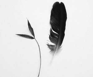 black and white image