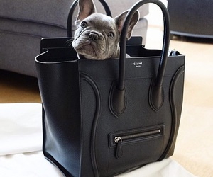 dog, bag, and celine image