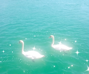 aesthetic, Swan, and water image