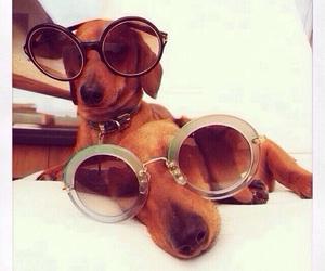 dachshund, dog, and sunglasses image