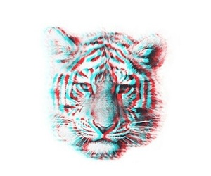 tiger, overlay, and transparent image