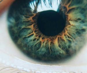 close, closeup, and deep image