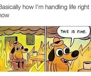 life, funny, and dog image