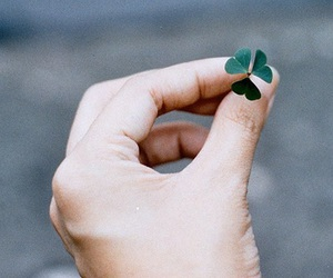 clover, hand, and lucky image