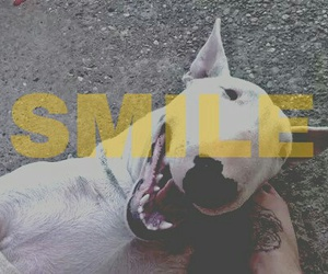 bullterrier and smile image