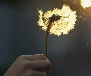beautiful, light, and photography image