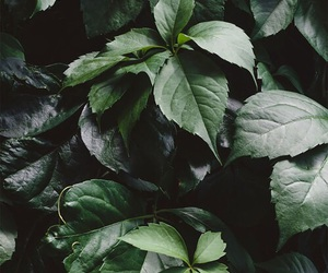 green, leaves, and theme image