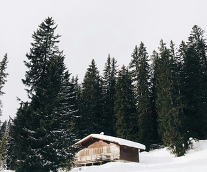 forest, snow, and white image