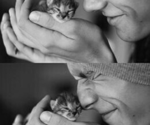 adorable, kittie, and lovely image