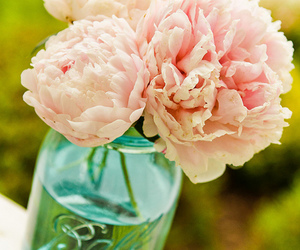 peonies, peony, and project365 image