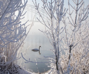 enchanted, fairytale, and frost image