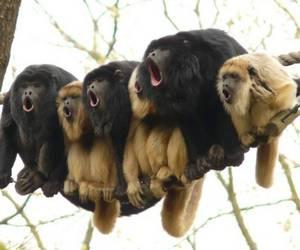 monkey, animal, and funny image