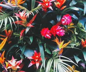 flowers, wallpaper, and tropical image