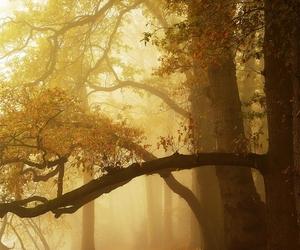 autumn, deviantart, and fall image